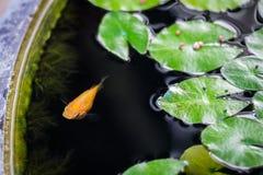 Рыбы в пруде Стоковые Фото