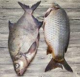2 рыбы в реальном маштабе времени больших свежих карпа лежа на деревянной доске Стоковое фото RF