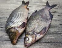 2 рыбы в реальном маштабе времени больших свежих карпа лежа на деревянной доске Стоковая Фотография RF