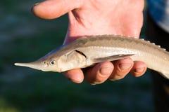 Рыбы в руке Стоковые Фотографии RF