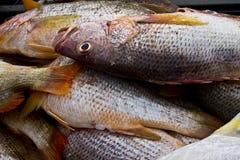 Рыбы в рынке Стоковое Фото