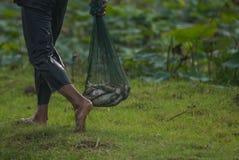 Рыбы в сумке сетки Стоковая Фотография RF