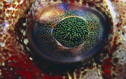 рыбы глаза Стоковая Фотография