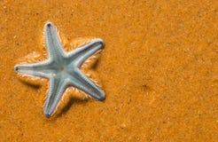 Рыбы голубой звезды на sandAsteroidea пляжа Стоковые Фотографии RF