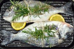 Рыбы леща моря Стоковые Фотографии RF
