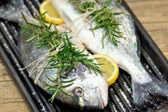 Рыбы леща моря Стоковые Фото