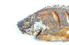 рыбы зажарили Стоковое Изображение RF