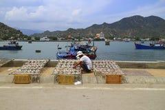 Рыбы засыхания рыболова в солнечном свете Стоковое Изображение RF