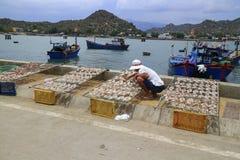 Рыбы засыхания рыболова в солнечном свете Стоковое фото RF