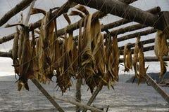 Рыбы засыхания Стоковые Изображения