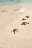 Рыбы звезды Стоковое Изображение RF