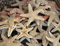 Рыбы звезды Стоковое фото RF