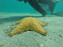 Рыбы звезды Стоковое Фото