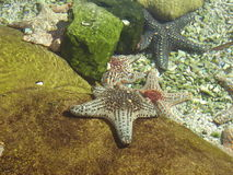 Рыбы звезды Стоковое Изображение