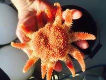 Рыбы звезды Стоковые Изображения