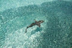 Рыбы звероловства акулы рифа в чистой воде, острове Австралии цапли Стоковое Изображение