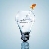 Рыбы золота внутри электрической лампочки стоковое изображение