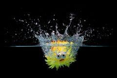 Рыбы игрушки брызгают в воду Стоковые Изображения