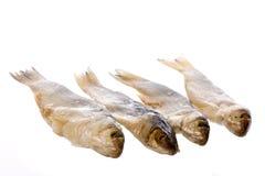 рыбы изолировали посолено стоковые фотографии rf