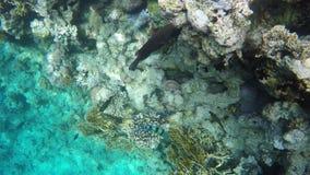 Рыбы ища еда среди кораллов сток-видео