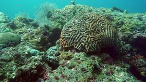 Рыбы и коралловый риф риф рыб коралла тропический E видеоматериал