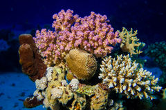 Рыбы и кораллы на рифе Стоковые Изображения RF