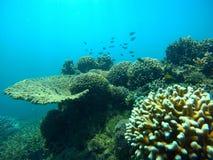 Рыбы и кораллы Стоковые Фотографии RF
