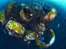 Рыбы и коралл Стоковое Изображение