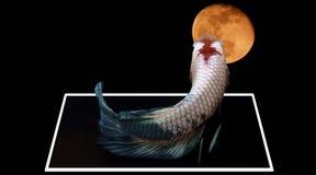 Рыбы и космос стоковая фотография rf
