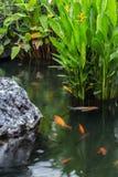 Рыбы и свежий сад Стоковая Фотография RF