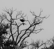 Рыбы и скопа в дереве стоковые изображения