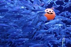 Рыбы и тыква Стоковые Фотографии RF