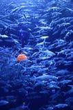 Рыбы и тыква Стоковая Фотография