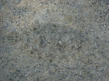 рыбы камуфлирования Стоковая Фотография RF