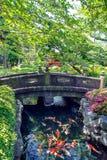 Рыбы карпа плавают в пруде в саде Стоковое Изображение