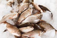 Рыбы карпа Crucian на льде как предпосылка Стоковая Фотография