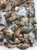 Рыбы карпа Crucian на льде Стоковое Изображение
