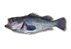 рыбы клиппирования изолировали путь Стоковые Изображения