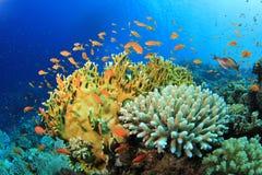 рыбы коралла тропические Стоковая Фотография