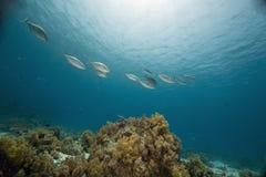 рыбы коралла стоковое фото