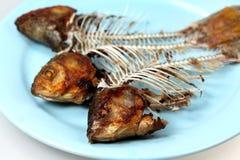 рыбы косточек Стоковое Изображение