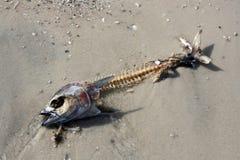 рыбы косточек Стоковые Фотографии RF