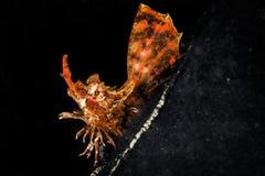 Рыбы косточки в темноте Стоковые Изображения RF