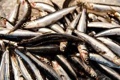 Рыбы, который нужно продать стоковое изображение