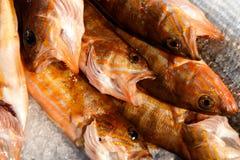 Рыбы, который нужно продать стоковые изображения rf