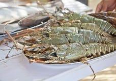 Рыбы креветок короля Masive свежие противопоставляют покрыно стоковая фотография