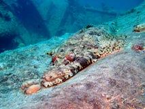 рыбы крокодила Стоковое фото RF