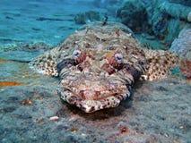 рыбы крокодила Стоковое Изображение