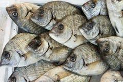 Рыбы леща Giltheads на рынке Стоковые Изображения RF
