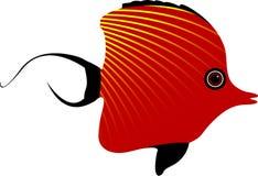 рыбы малые Стоковое Фото